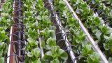 Israel levererar system för droppbevattning till paraguayanska bönder