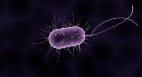 Göra bra bakterier mer motståndskraftiga